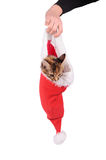 Funny cat in Santa Claus cap Stock Photography