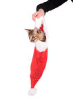 Funny cat in Santa Claus cap Royalty Free Stock Photography