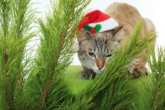Funny cat in a Santa Claus hat under Christmas tree. Funny cat in a Santa Claus hat under a Christmas tree Royalty Free Stock Image