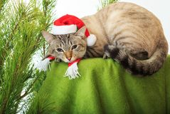 Funny cat in a Santa Claus hat under Christmas tree. Funny cat in a Santa Claus hat under a Christmas tree Stock Photography