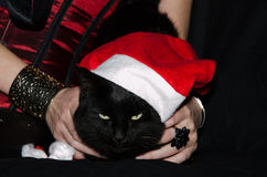 Funny cat with santa hat Stock Photos