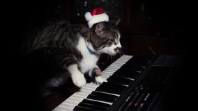 Funny cat in Santa Hat Plays a keyboard, organ or piano. A funny cat wearing a Santa Claus hat playing a keyboard or organ stock footage