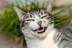Funny Cat - Sarcastic. Garden - smile Stock Images