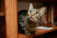 Funny cat sitting and playing Royalty Free Stock Images