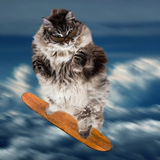 Funny cat skateboarding in the sky. Funny cat skateboarding in the blue sky with clouds Royalty Free Stock Images