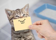 Funny cat with crazy smile sitting near clean toilet. Funny cat with smile on cardboard sitting near litter box royalty free stock photography