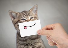 Funny cat smiling with tongue. Very funny cat with smile and tongue on cardboard stock image