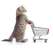 Funny cat standing with shopping cart side view. Funny cat with shopping cart side view isolated on white royalty free stock photo