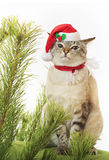 Funny cat in suit of Santa Claus. Royalty Free Stock Photos