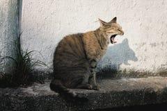 Funny cat on thr street stock photo