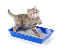 Funny cat in toilet tray box with litter isolated. On white Royalty Free Stock Images