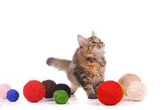 Funny cat with toys Royalty Free Stock Photo
