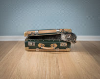 Funny cat in a vintage suitcase Stock Images