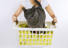 Funny cat wash. Cat in white plastic basket with colorful laundry to wash Royalty Free Stock Photos