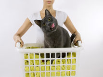 Funny cat wash. Cat in white plastic basket with colorful laundry to wash Royalty Free Stock Image