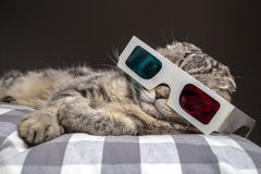 Funny cat watching a movie on television in 3D glasses. Funny scottish fold cat watching a movie on television in 3D glasses lying on a pillow on the sofa Stock Photos