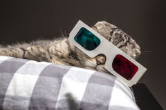 Funny cat watching a movie on television in 3D glasses. Funny scottish fold cat watching a movie on television in 3D glasses lying on a pillow on the sofa Royalty Free Stock Photo
