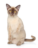 Funny cat on white background Royalty Free Stock Images