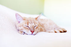 Funny Cat Royalty Free Stock Photo