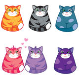 Funny cats Royalty Free Stock Image
