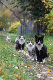 Funny cats. Funny cat in the village in summer Stock Photography