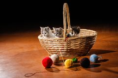 Funny cats in the basket on the floor stock photography