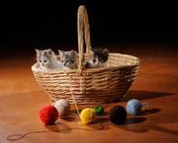Funny cats in basket royalty free stock images