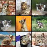 Funny cats images. Collage with domestic animals in different situations royalty free stock photography
