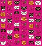 Funny cats muzzles Royalty Free Stock Photo