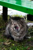 Funny cats after the rain stock image