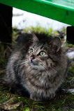 Funny cats after the rain. In the garden.  stock photo