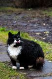 Funny cats after the rain. In the garden.  royalty free stock photography
