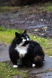 Funny cats after the rain. In the garden Royalty Free Stock Photo