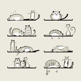 Funny cats on shelves Royalty Free Stock Images