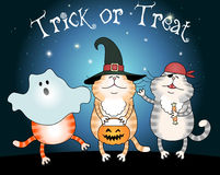 Funny cats trick or treating Stock Photos