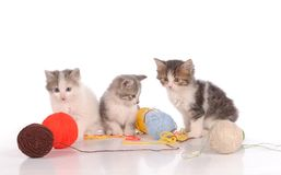 Funny cats with tufts of yarn on a white background. Kittens with tufts of yarn on a white background royalty free stock image