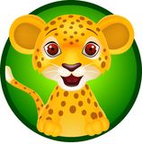 Funny cheetah smiling Royalty Free Stock Image