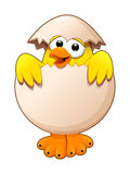 Funny chick in the egg. Royalty Free Stock Photos