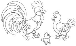 Rooster, hen and chick Royalty Free Stock Image