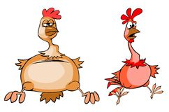 Funny chicken and rooster Stock Photography