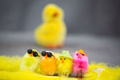 Funny chicks on eastern Royalty Free Stock Photography
