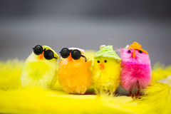 Funny chicks on eastern Royalty Free Stock Images