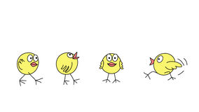 Funny chicks  Stock Images