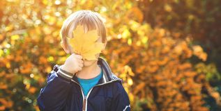 Funny child playing in autumn park. Little boy hide his eyes behind a maple leaf. Happy childhood. Autumn time. Kid plays with aut royalty free stock photo