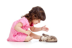 Funny child playing with Scottish kitten Royalty Free Stock Image