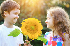 Funny children holding sunflower in sunny day. Royalty Free Stock Photography