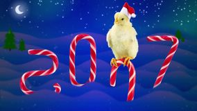 Funny 2017 Chinese New Year concept with text, small rooster. Slipping on the candy cane and then falls in to snow, candies as a numbers of year, winter night