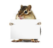 Funny chipmunk with banner Royalty Free Stock Images