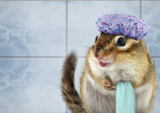 Funny chipmunk bathing stock photos