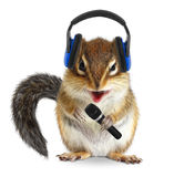 Funny chipmunk dj with headphone and microphone on white Stock Images